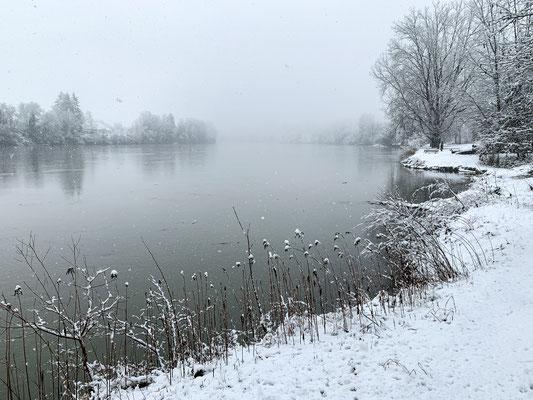 Verschneite Ufervegetation. Rheinsulz, 14.01.2021. (Foto PC)