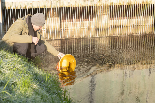 Aussetzen der abgestreiften Forellen in den Hinterwasserkanal bei Full. (Foto CC)