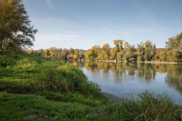 Der Altrhein bei Schwaderloch. Gras und Sandbänke wechseln sich ab. (Foto CC)