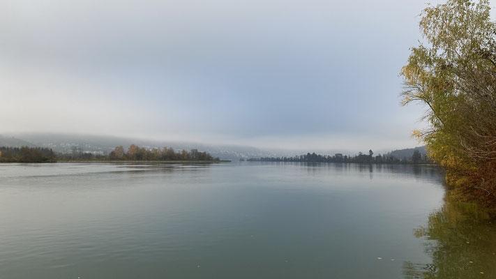 Der gestaute Rhein oberhalb des Stauwehrs Albbruck-Dogern. (Foto CC)