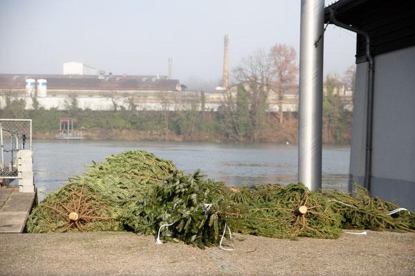 Laichbäume versenken. Februar 2021. (Foto CC)
