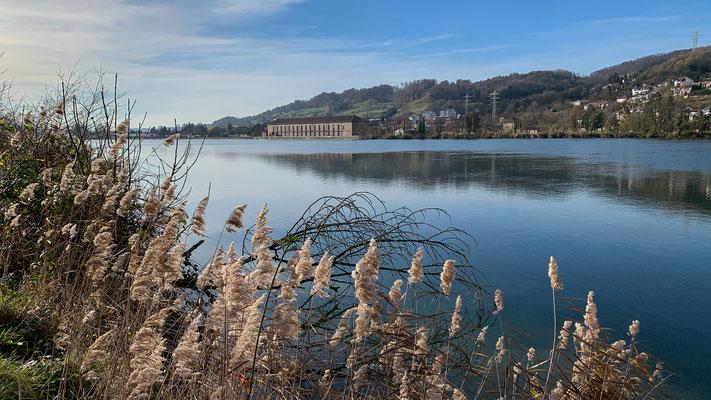 Bewachsenes Ufer am Rhein bei Full. (Foto PC)
