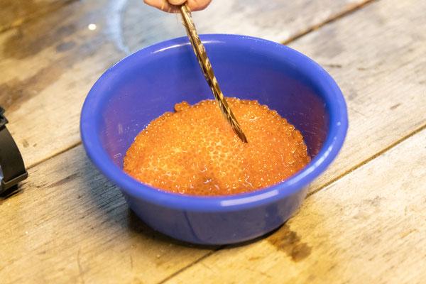 Vorsichtig wird mit einer Feder das Gemisch aus Rogen, Milch und Wasser vermischt und so befruchtet. (Foto CC)