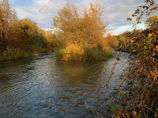 Das Umgehungsgewässer bei Leibstadt - Teil der Schonstrecke beim Stauwehr (Fischen verboten). (Foto PC)