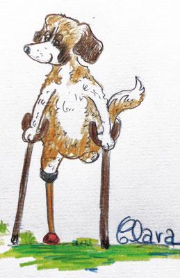 Handicap Hund Dreibein