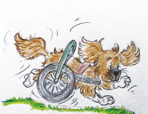Illustration Rolli Hund