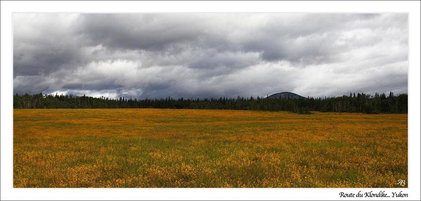 Route du Klondike... Yukon