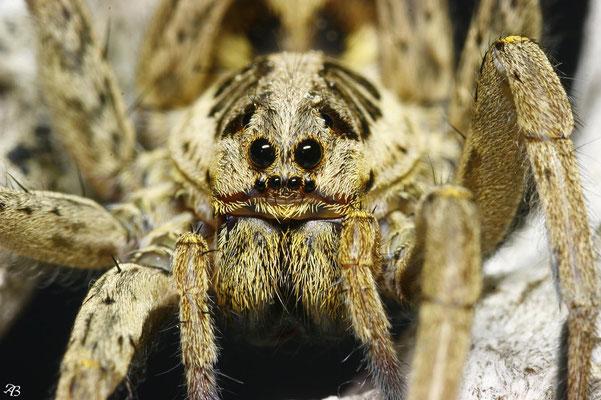 Araignée 1