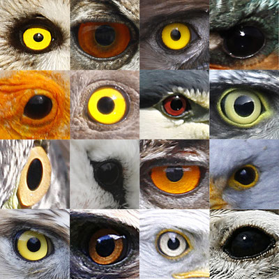 des yeux...