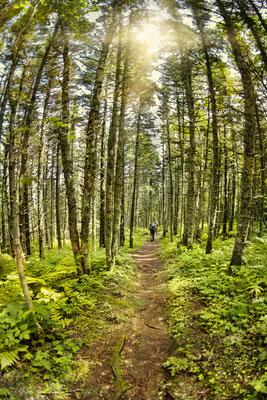 Photo de paysage avec interaction humaine; Sentier de randonnée, Parc national Forillon, Parcs Canada, Québec; 2015; photo voyage personnel; rôle: photographie, travail postproduction.