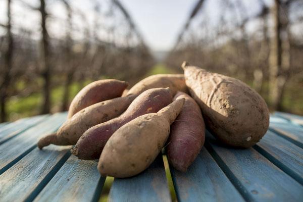 Auf unsere Steirischen Süßkartoffeln sind wir besonders stolz.