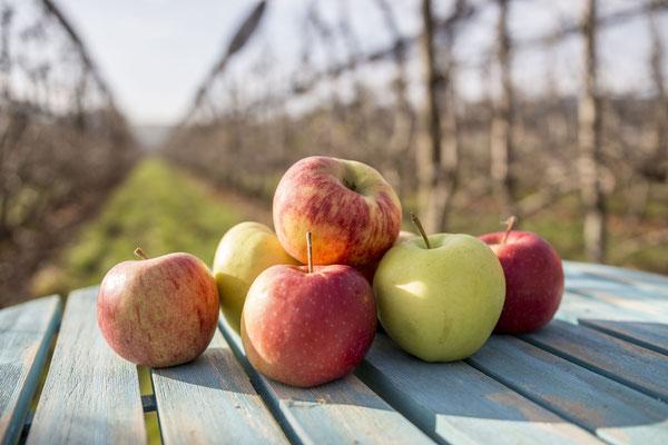 Bei uns bekommst du verschiedene Sorten Äpfel.