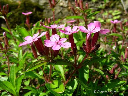 Saponaria ocymoides - Kleines Seifenkraut