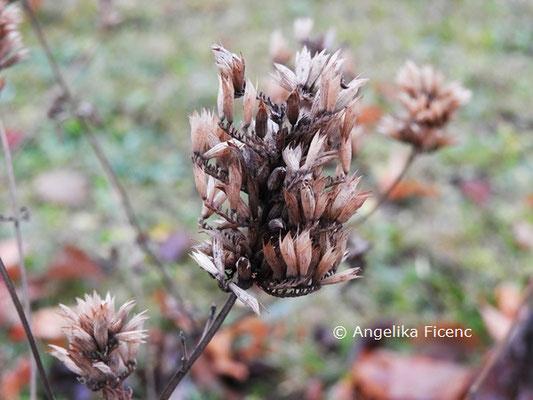 Agastache foeniculum © Mag. Angelika Ficenc