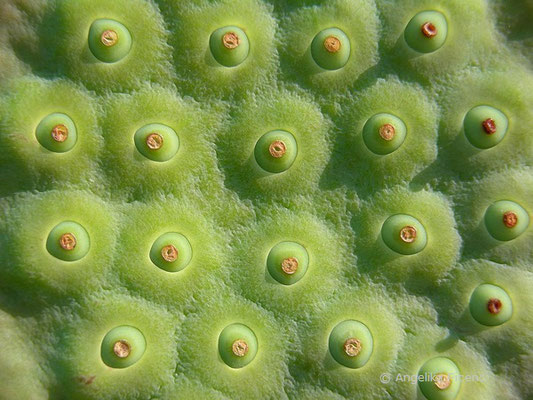 Frucht   © Mag. Angelika Ficenc