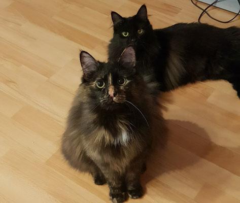 Raven und Shadow