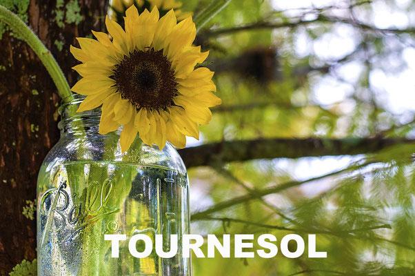 AMETHIC HUILE DE TOURNESOL BIO
