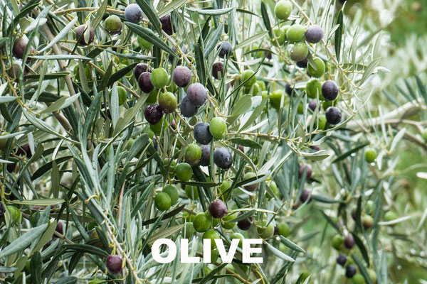 AMETHIC HUILE D'OLIVE EXTRA VIERGE