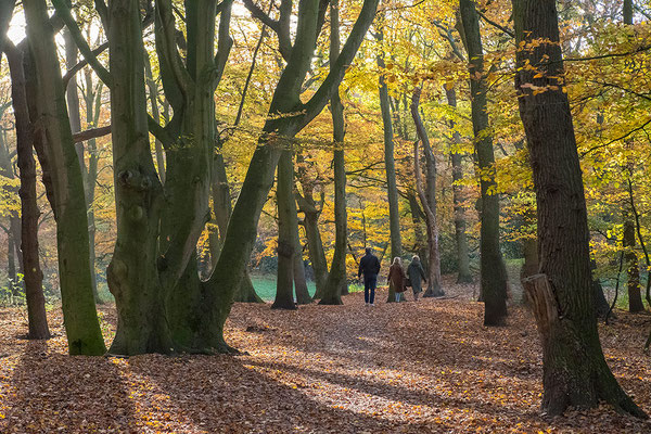 Wandelaars in Landgoed Clingendael