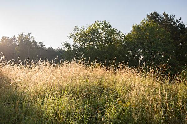 Kalkgrasland bij ochtendgloren, Viroinval, België