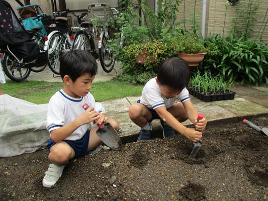 土を掘って