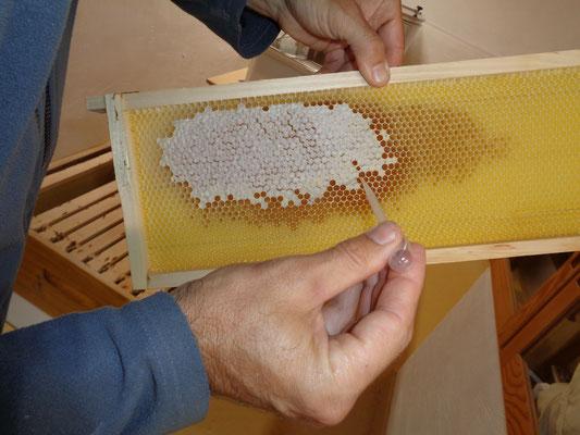 Honigkontrolle