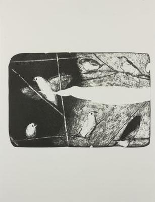 java sparrow#3  2017 ○○○×○○○mm 紙に石版画
