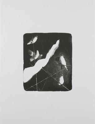 java sparrow#2  2017 ○○○×○○○mm 紙に石版画