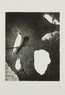 java sparrow  2017 170×210mm 紙に石版画