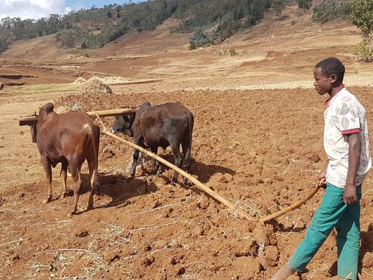 Préparation du sol pour les semailles ou plantations
