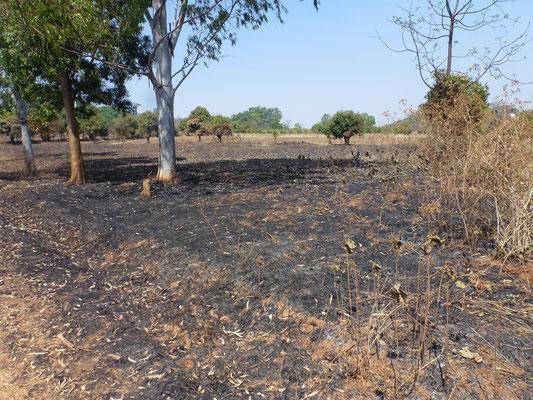 La pratique des brûlis est très répandue pour nettoyer les sols