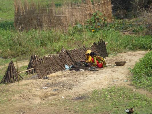 """Fabrication de """"bâtons"""" de chauffage. Des morceaux de bois sont recouverts de 2 cm environ de bouse et mis à sècher. Ils servent de matériaux de combustion pour la cuisine."""