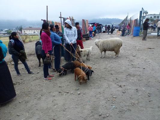Marché aux animaux