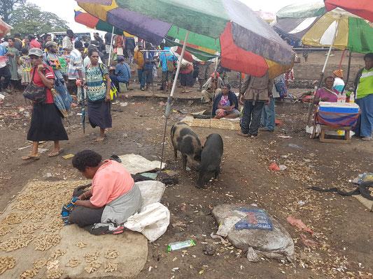 Un marché avec les cochons.