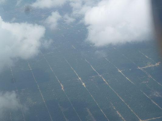 Vue d'avion on devine les plantations de palmiers à huile