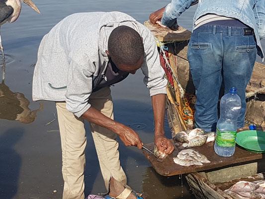 """Découpe des filets de poisson """"au cul"""" du bateau"""