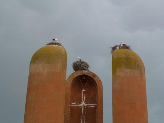 Des cigognes partout dans le paysage