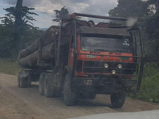 Les camions de billes de bois précieux se suivent sur les pistes et roulent 7 jours sur 7