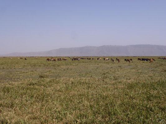 Immense plaine parsemée de troupeaux avec leurs gardiens.