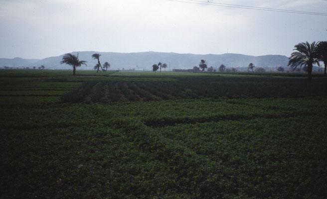 Quelques champs de verdures