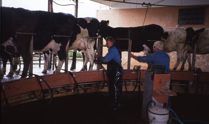 Traite des vaches en rototandem