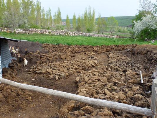 Différentes phases dans le sèchage du fumier pour en obtenir des briques sèches