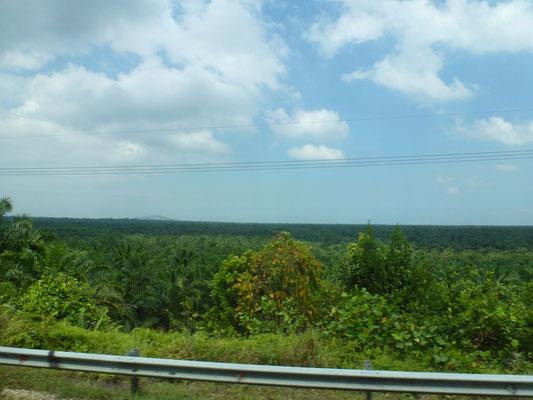 Des plantations a perte de vue