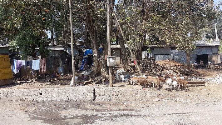 Scène de vie dans une rue d'Addis Abeba