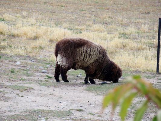 (6) Who are you ? もしかして、醜い羊の子?