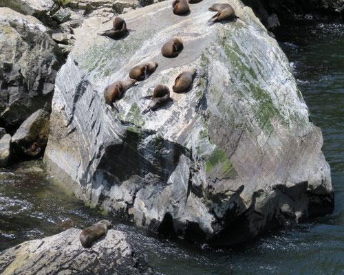(37) こんな急な岩をどうやって登った?