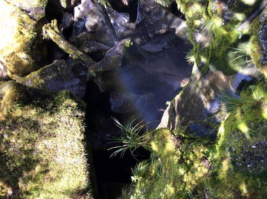 (19) 散策路の橋から下を覗き込むと、不思議な世界が‥。