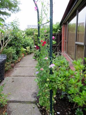 (17) 広くはないが家の周りを庭が取り囲む。