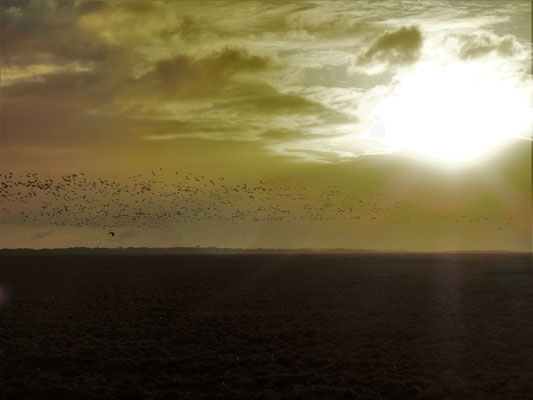 Aufsteigende Vögel