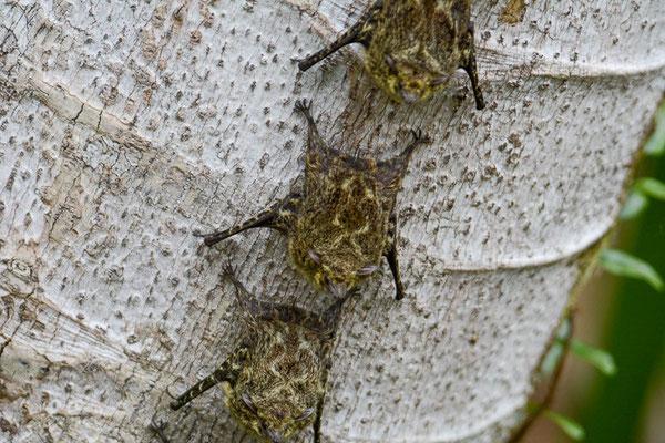 Nur von Nahem erkennt man die einzelnen Fledermäuse.